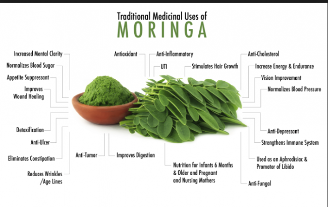 Ric and Prof. Hope visit the village to talk about the Moringa plant.