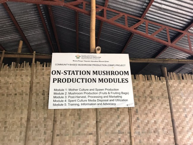 Mushroom Farming in the village.
